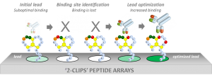 2-clips-peptide-arrays