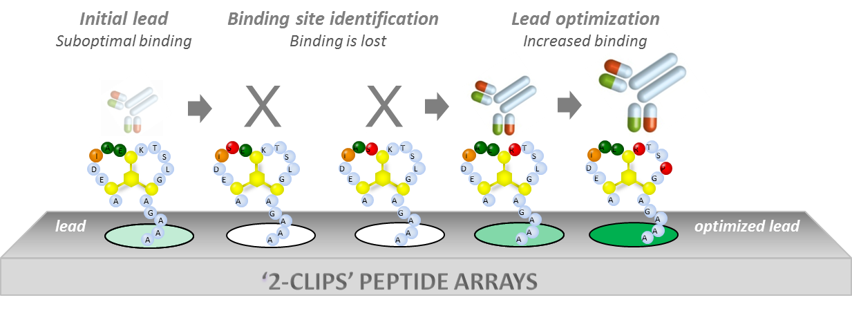 2-clips-peptide-arrays