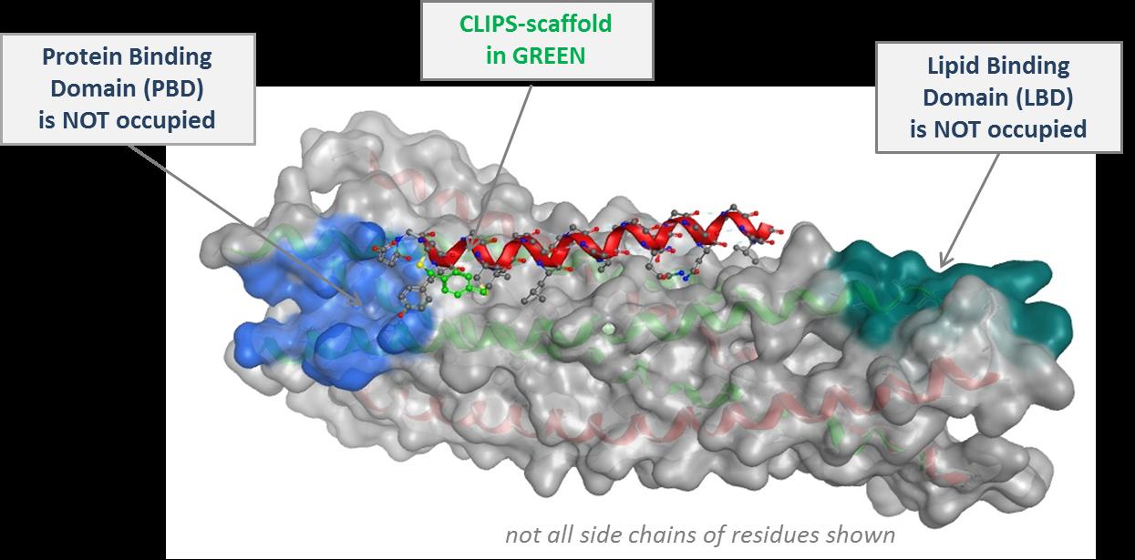 26mer-peptide-sequence-e1433729436754