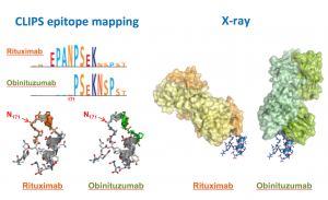 Comparative epitope mapping of rituximab and obinutuzumab