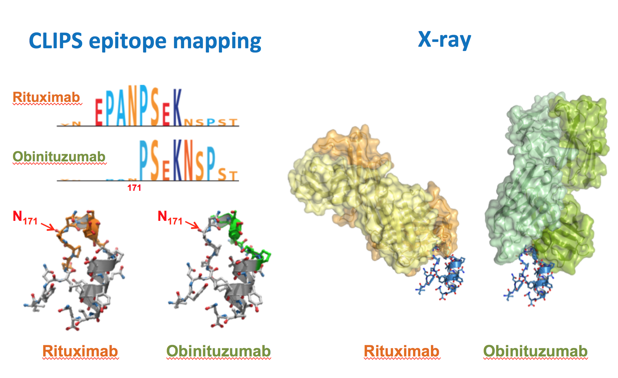 Comparative epitope mapping of Rituximab and Obinutuzmab