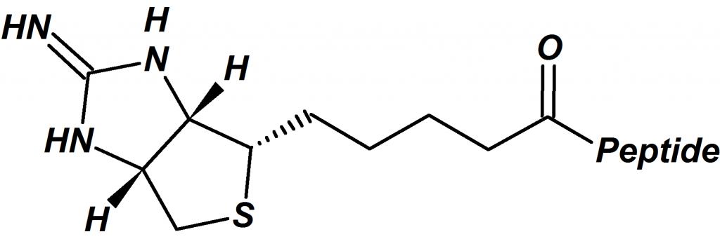 Iminobiotin