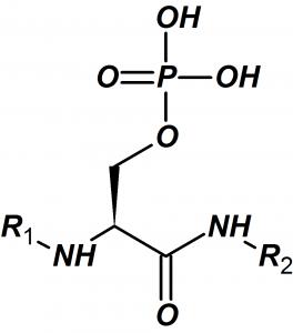Phosphoserine