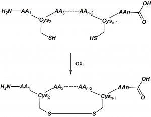 Cys-Cys cyclization