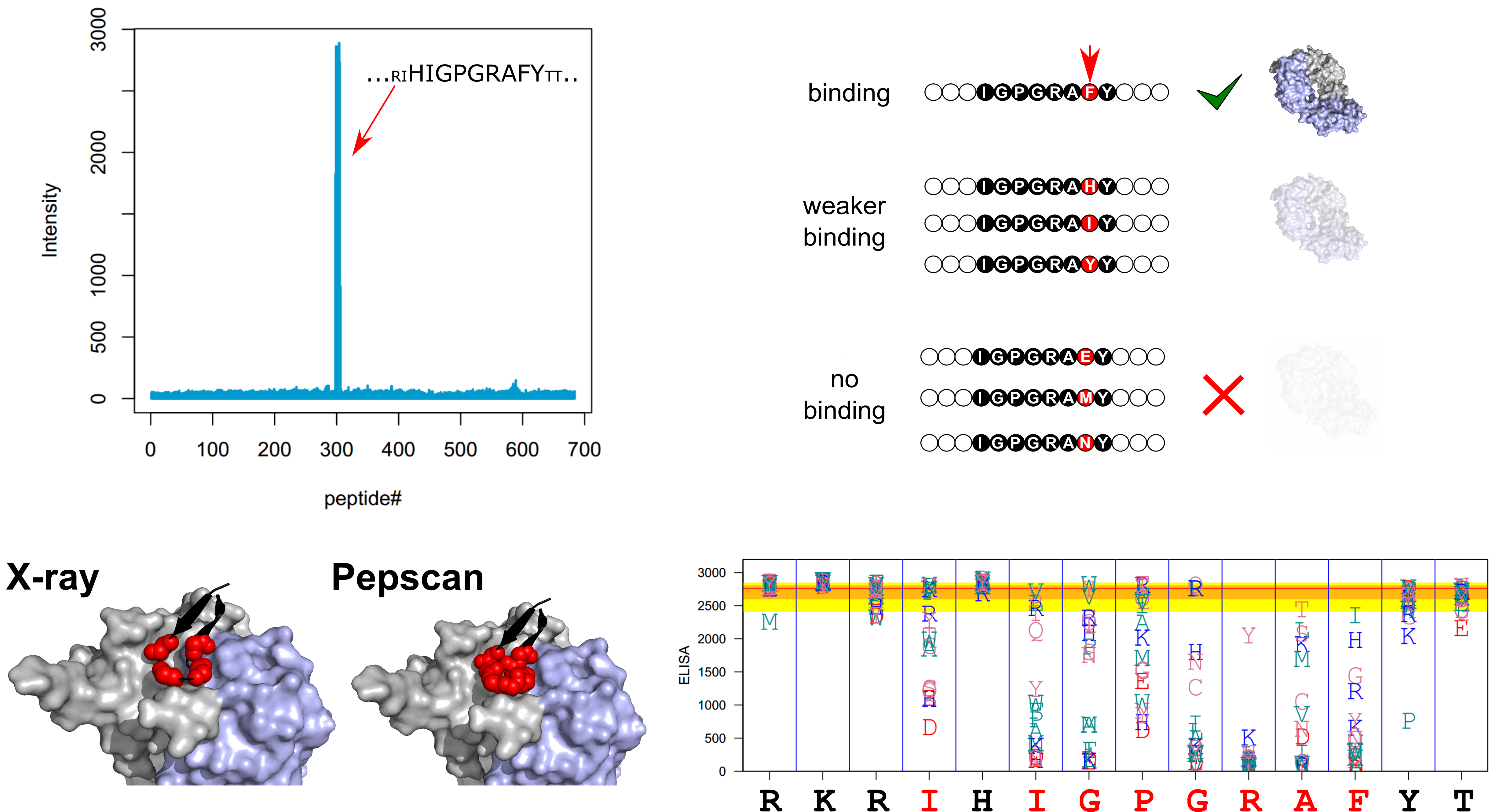 HiSense Linear Epitope Mapping of anti-HIV monoclonal antibodies (F425-B4e8)