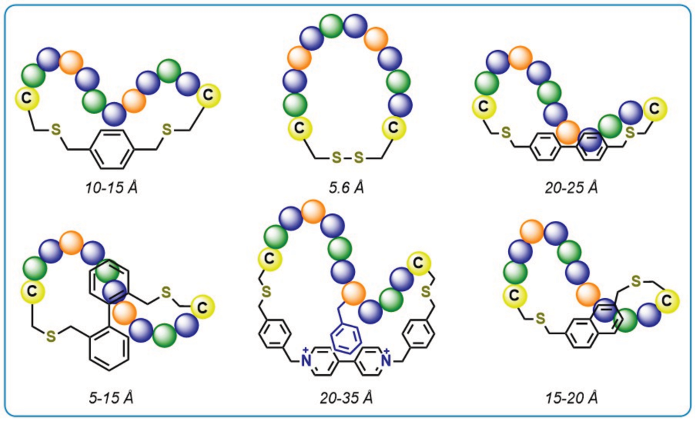 Structure of the various different T-2 scaffolds and corresponding (anticipated) peptide conformations.